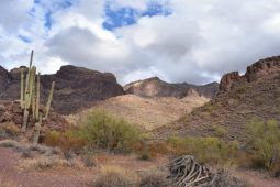 Southern AZ <> Ajo and Organ Pipe Cactus NM